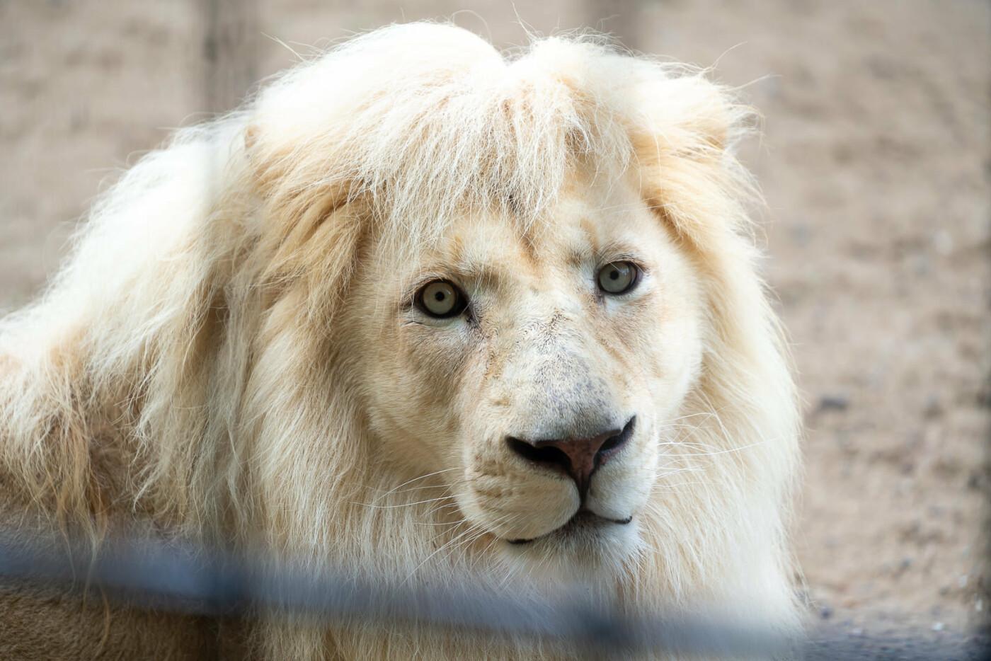 Час милуватися тваринами з Бердянського зоопарку «Сафарі», - ФОТО, фото-32