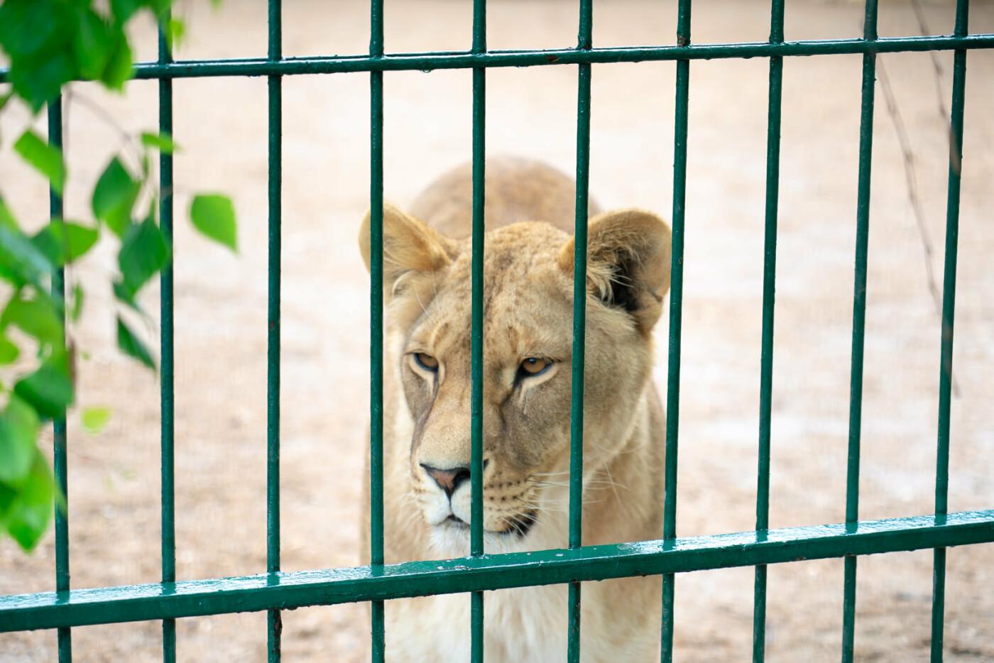 Час милуватися тваринами з Бердянського зоопарку «Сафарі», - ФОТО, фото-19