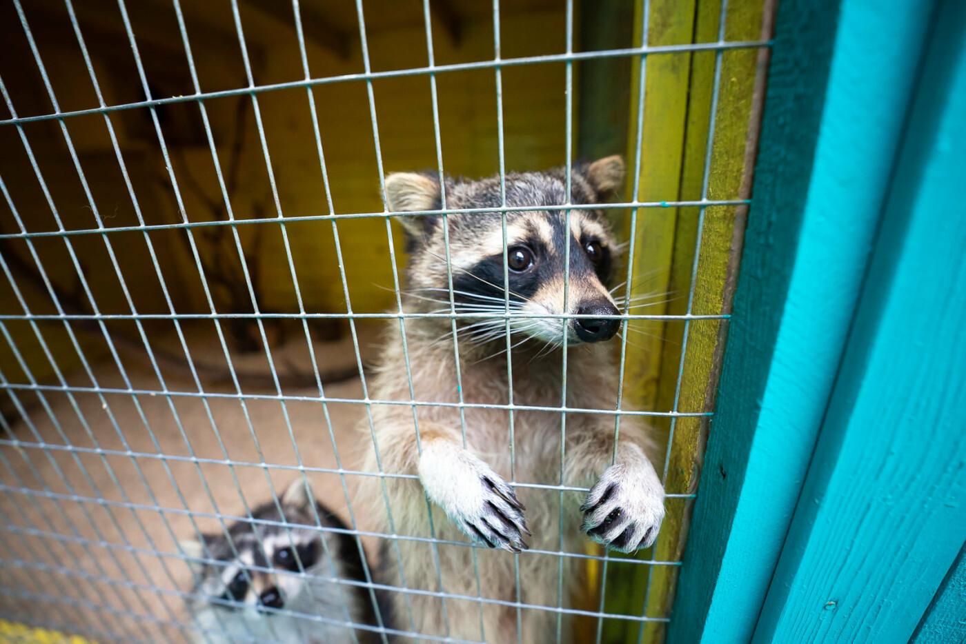Час милуватися тваринами з Бердянського зоопарку «Сафарі», - ФОТО, фото-13
