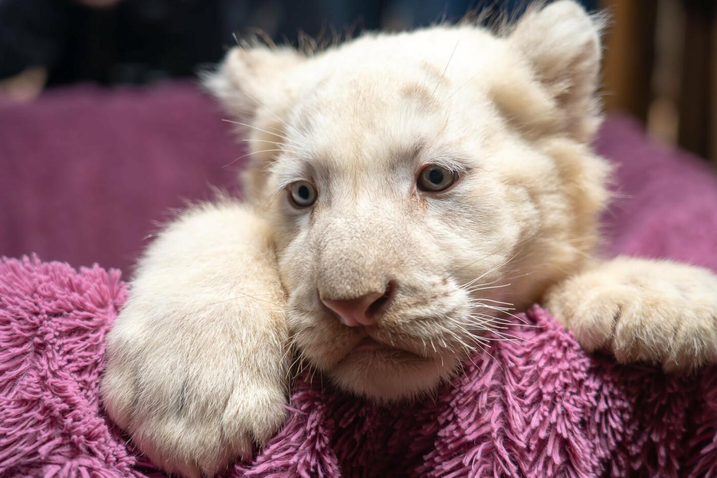 Час милуватися тваринами з Бердянського зоопарку «Сафарі», - ФОТО, фото-41