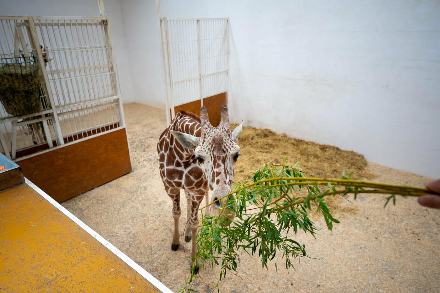 Час милуватися тваринами з Бердянського зоопарку «Сафарі», - ФОТО, фото-8