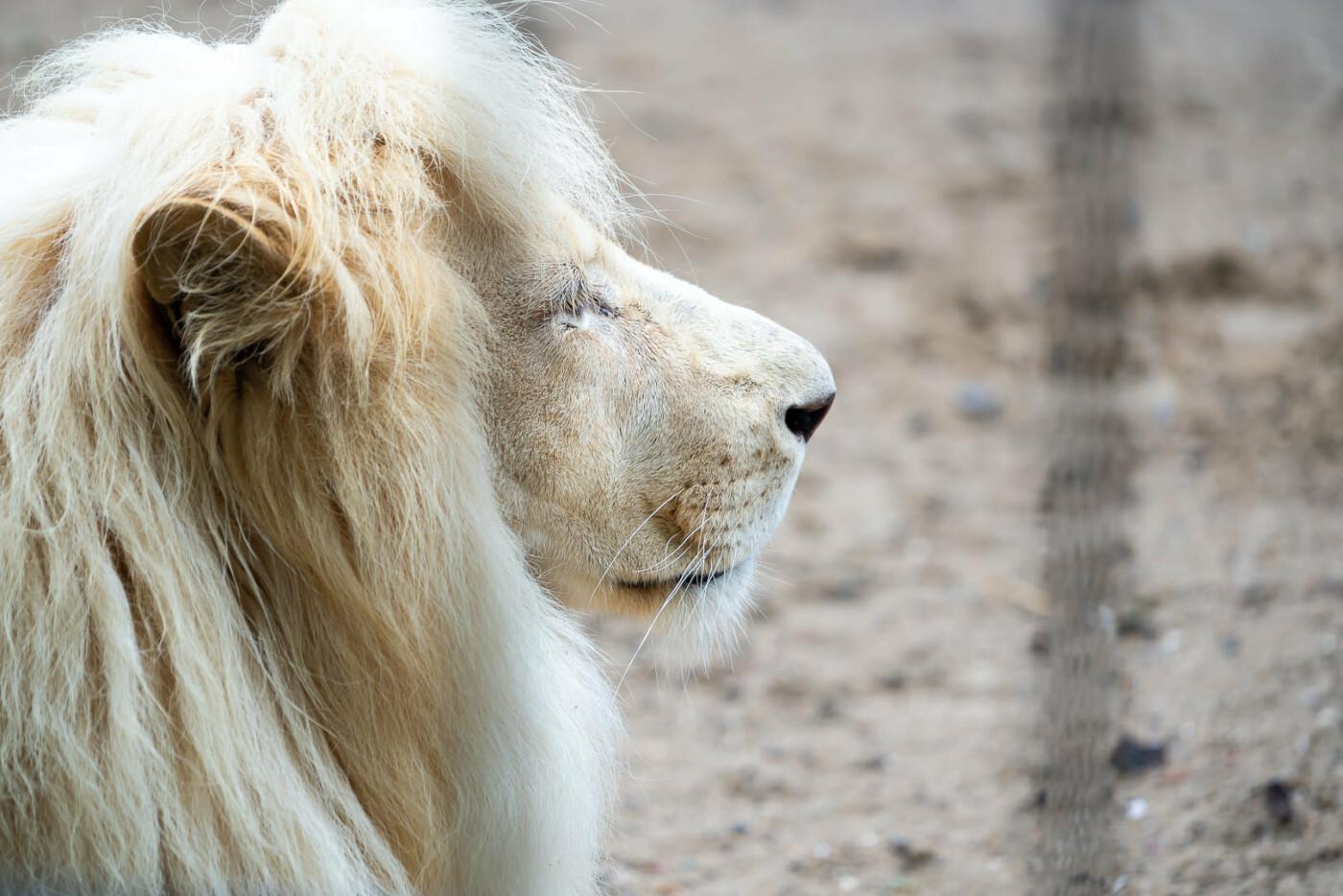 Час милуватися тваринами з Бердянського зоопарку «Сафарі», - ФОТО, фото-33