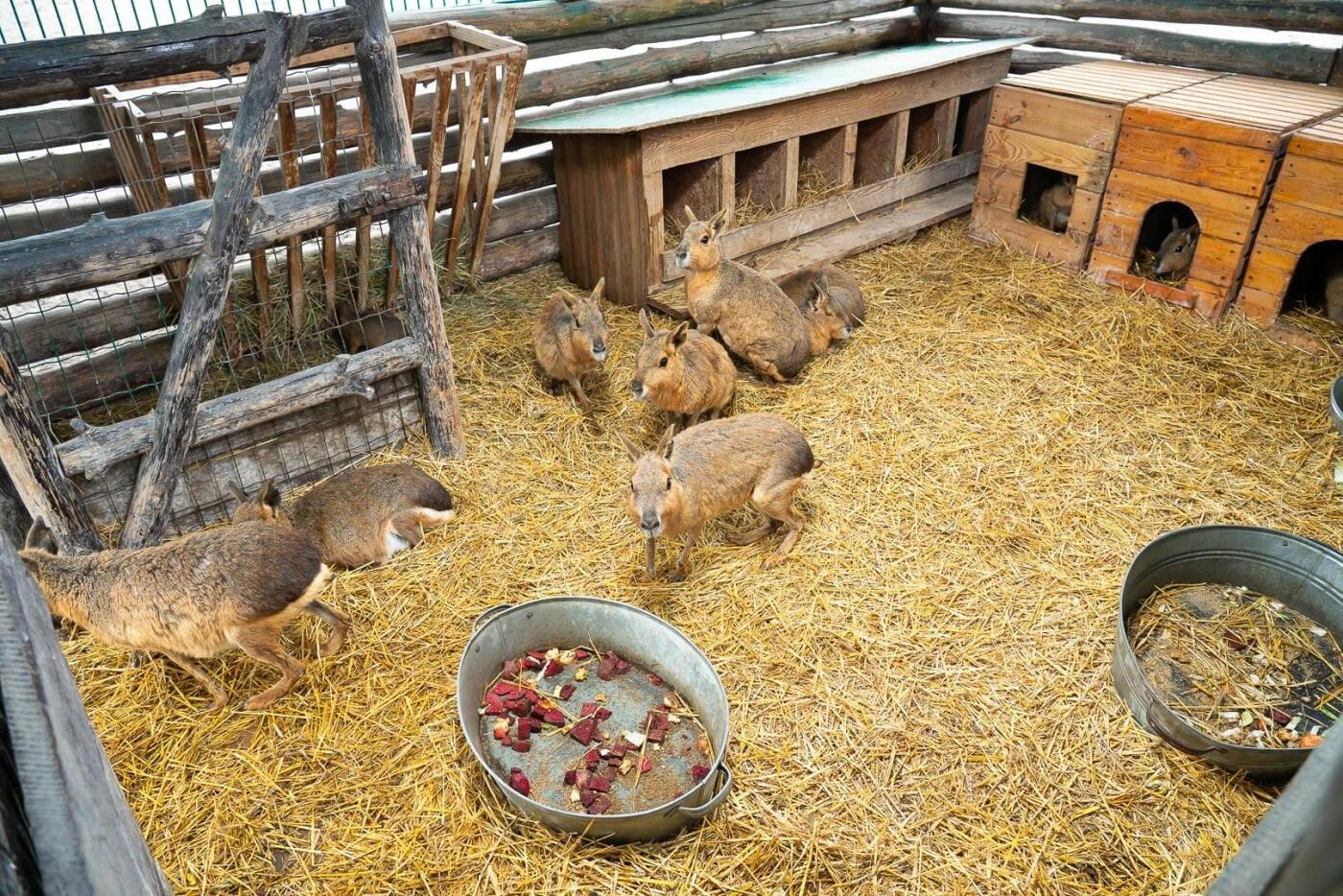 Час милуватися тваринами з Бердянського зоопарку «Сафарі», - ФОТО, фото-1