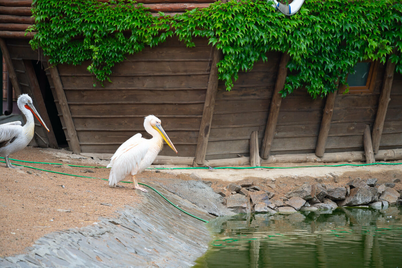 Час милуватися тваринами з Бердянського зоопарку «Сафарі», - ФОТО, фото-34
