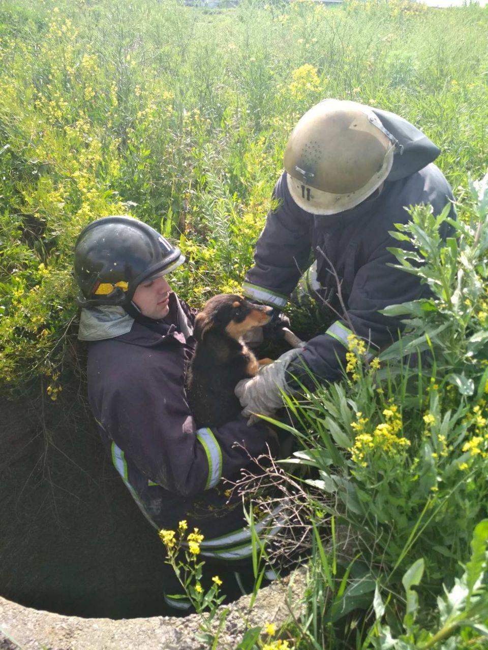 В Бердянске спасли щенков, которые упали в колодец, фото-1