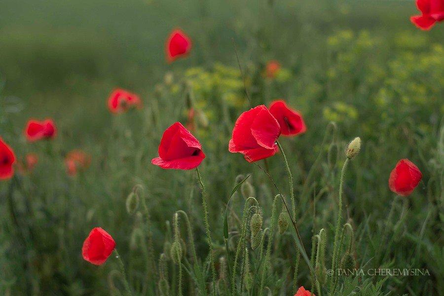 Краса природи поблизу Бердянська, - ФОТО, фото-1