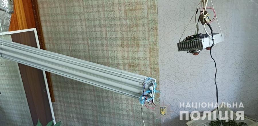 В Бердянске полицейские ликвидировали 70 кустов конопли , фото-3