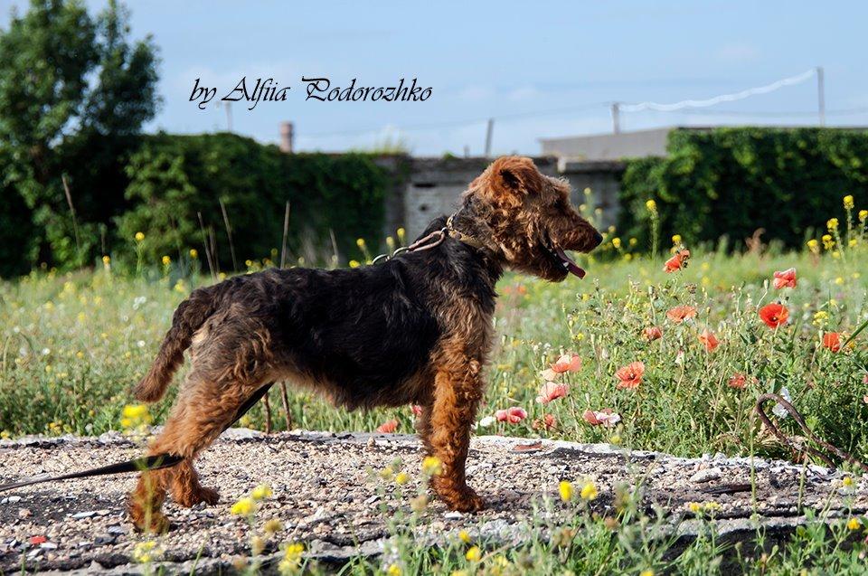 В Бердянске провели выставку охотничьих собак, - ФОТО, фото-4