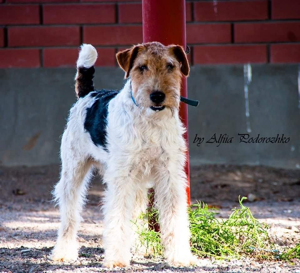 В Бердянске провели выставку охотничьих собак, - ФОТО, фото-5