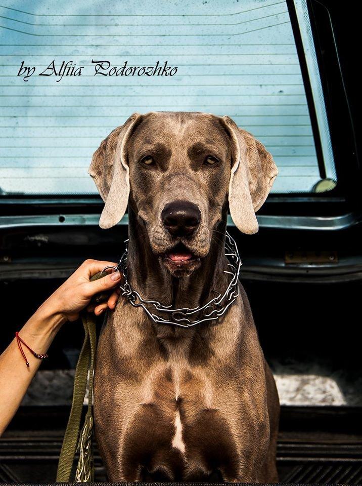 В Бердянске провели выставку охотничьих собак, - ФОТО, фото-7