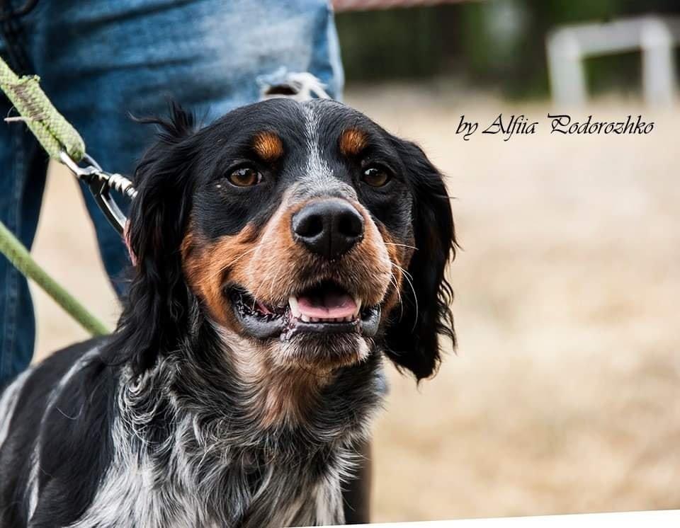 В Бердянске провели выставку охотничьих собак, - ФОТО, фото-8
