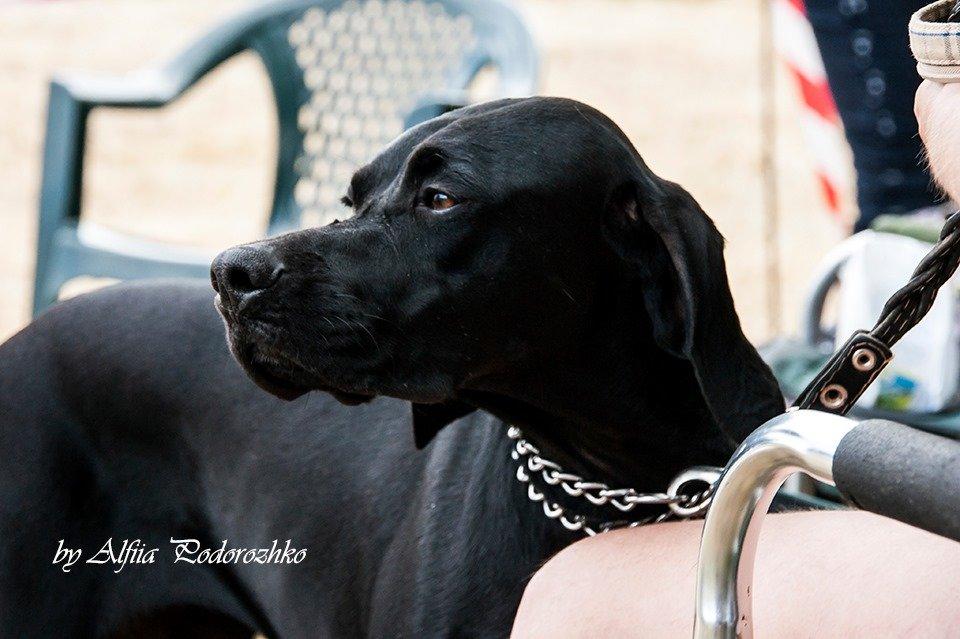 В Бердянске провели выставку охотничьих собак, - ФОТО, фото-11