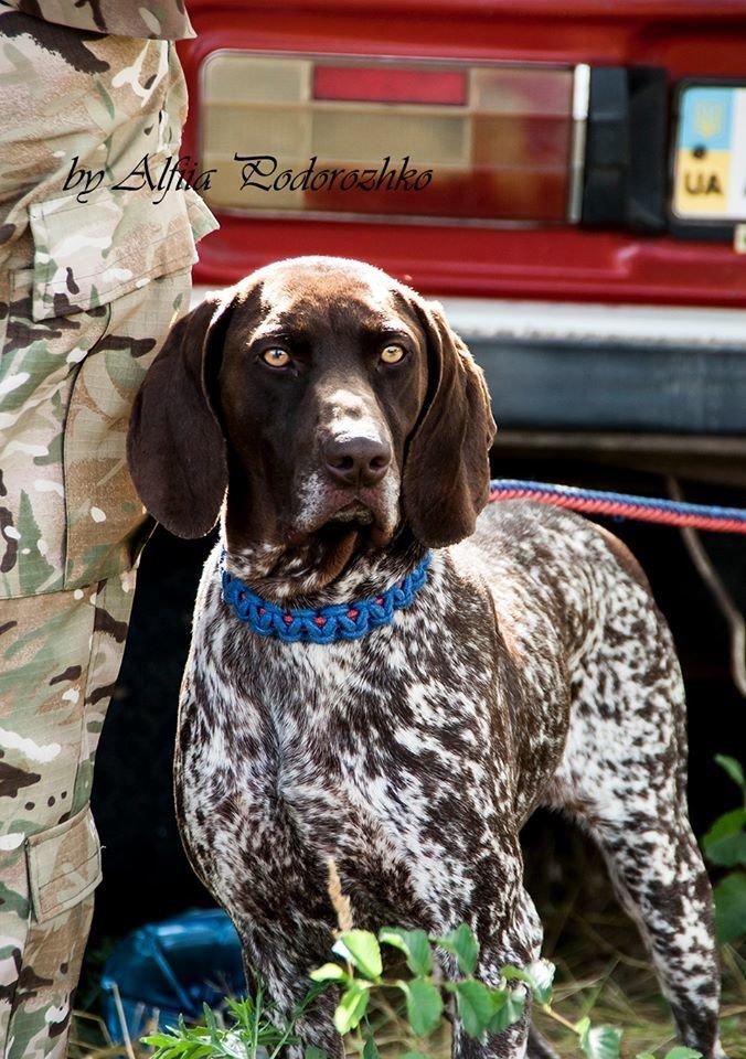 В Бердянске провели выставку охотничьих собак, - ФОТО, фото-12