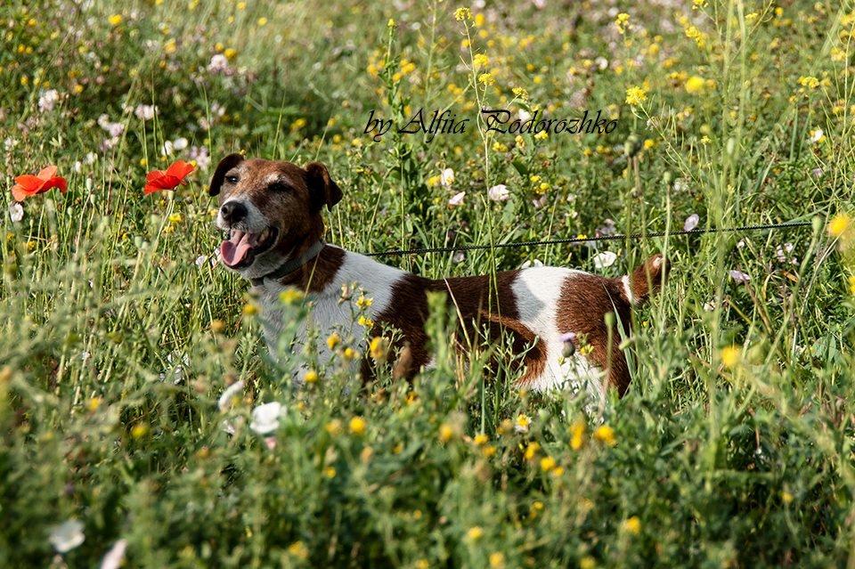 В Бердянске провели выставку охотничьих собак, - ФОТО, фото-13