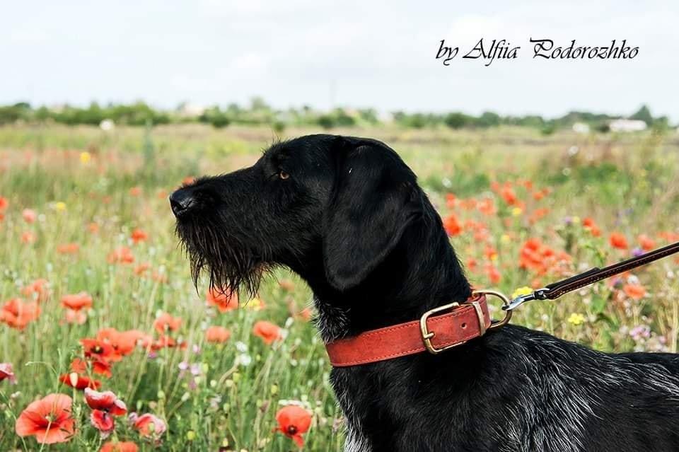 В Бердянске провели выставку охотничьих собак, - ФОТО, фото-14