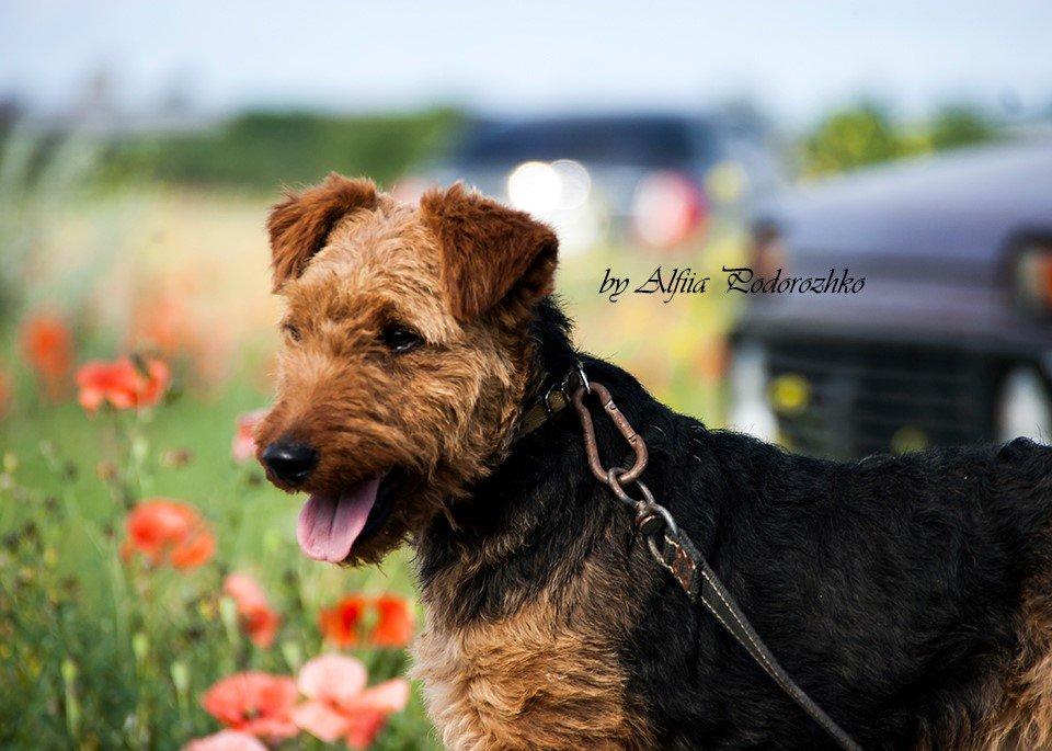 В Бердянске провели выставку охотничьих собак, - ФОТО, фото-15