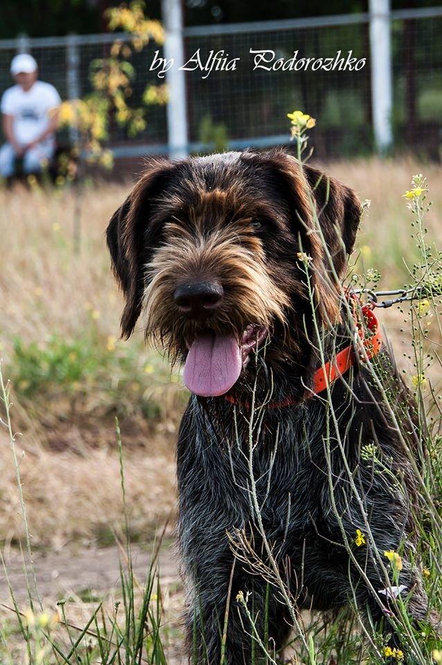 В Бердянске провели выставку охотничьих собак, - ФОТО, фото-16
