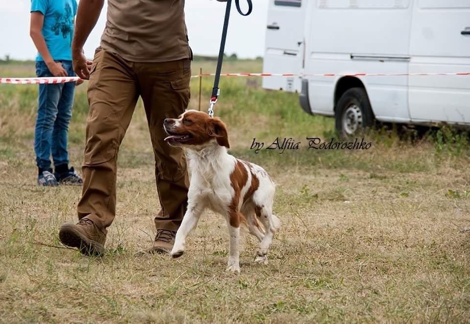 В Бердянске провели выставку охотничьих собак, - ФОТО, фото-17