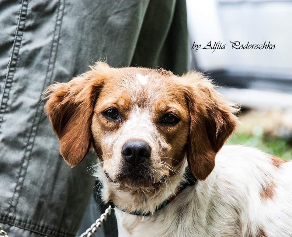 В Бердянске провели выставку охотничьих собак, - ФОТО, фото-18