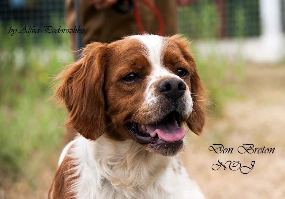 В Бердянске провели выставку охотничьих собак, - ФОТО, фото-19
