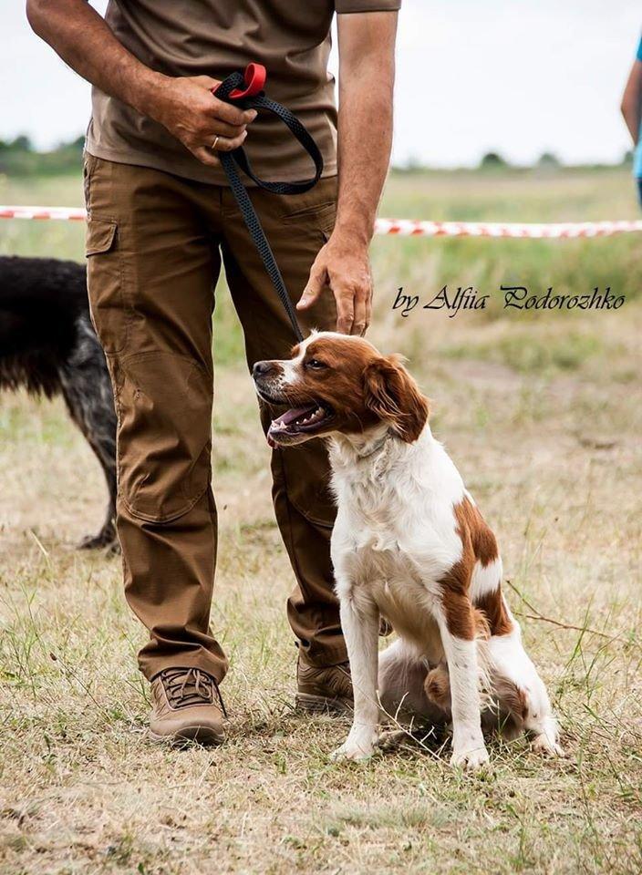 В Бердянске провели выставку охотничьих собак, - ФОТО, фото-21