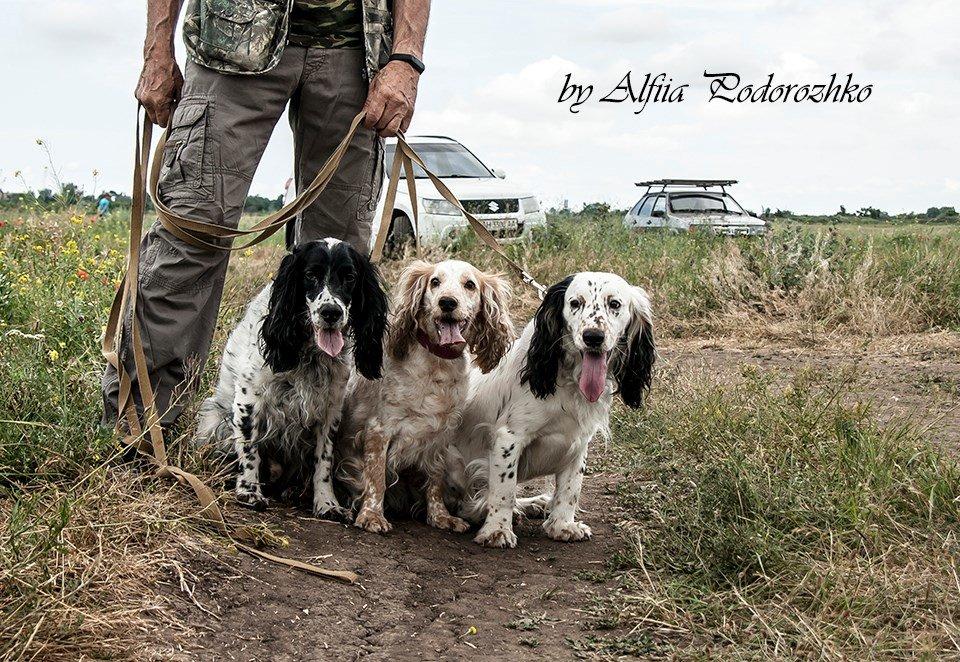 В Бердянске провели выставку охотничьих собак, - ФОТО, фото-23