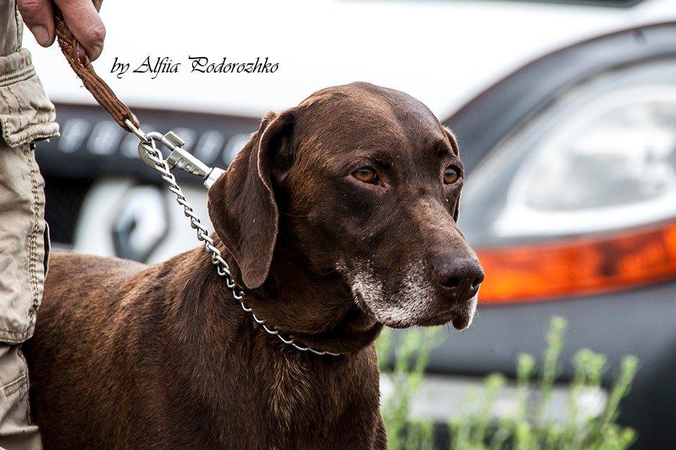 В Бердянске провели выставку охотничьих собак, - ФОТО, фото-1