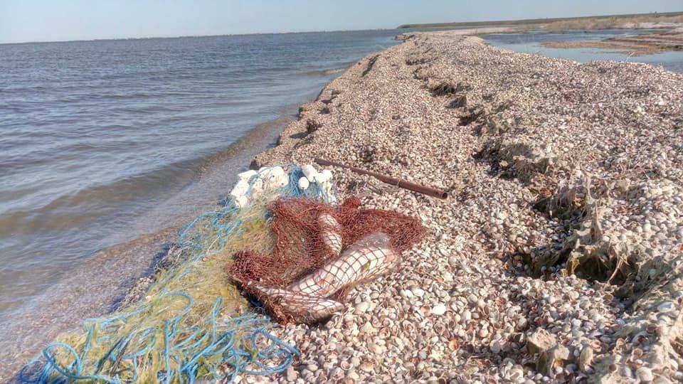 В Азовском море браконьеры ловили рыбу сетями, фото-2