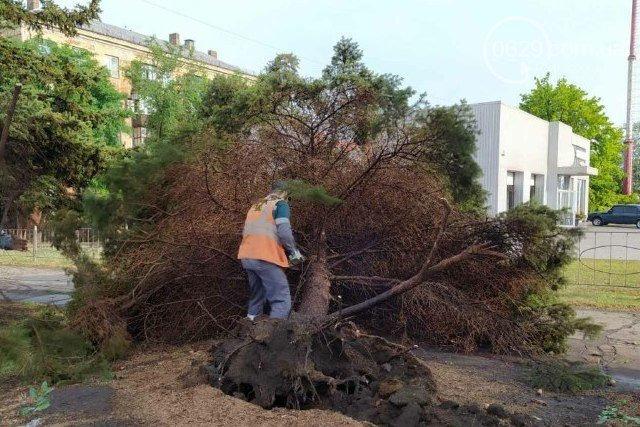 Сорванные крыши, сломанные деревья и вода по пояс: в Мариуполе прошел сильный ливень, - ФОТО, ВИДЕО, фото-9