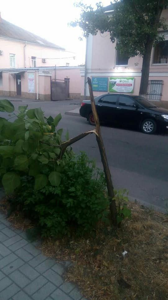 В центре Бердянска вандал ножом резал дерево, фото-2