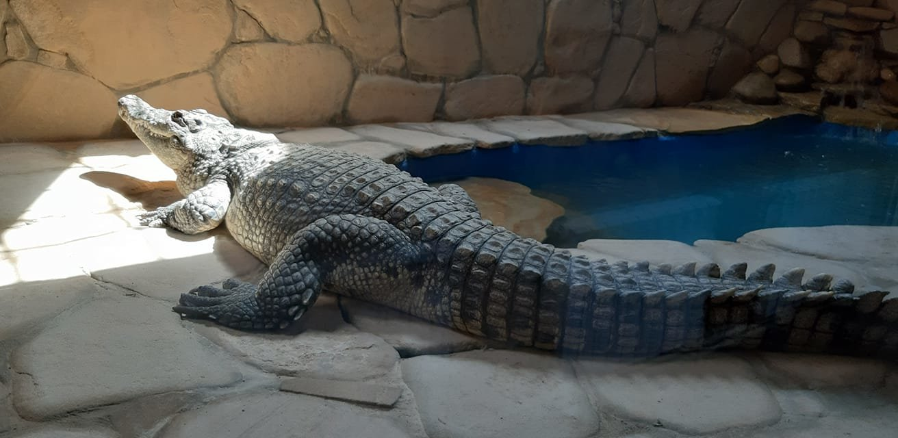 А вы уже были в террариуме бердянского зоопарка «Сафари»? - ФОТО, фото-3