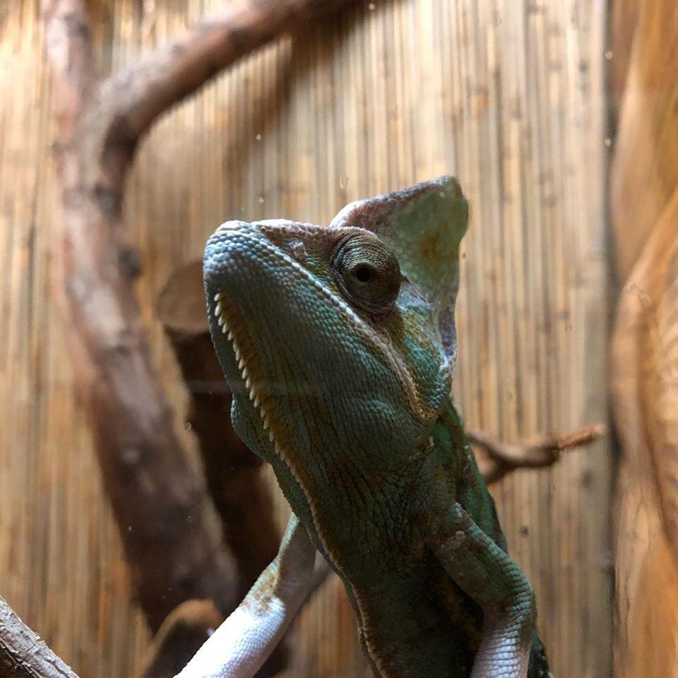 А вы уже были в террариуме бердянского зоопарка «Сафари»? - ФОТО, фото-2