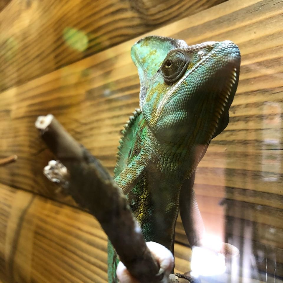 А вы уже были в террариуме бердянского зоопарка «Сафари»? - ФОТО, фото-1