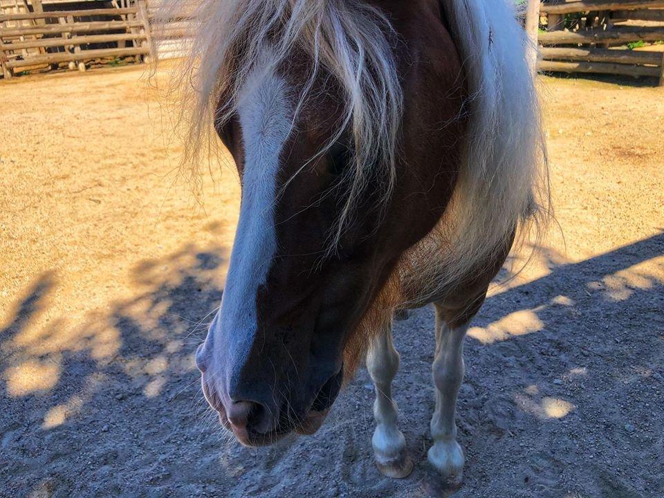 """В бердянском """"Сафари"""" есть редкая порода пони"""
