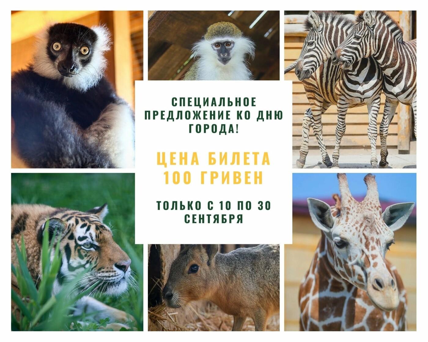 """Бердянский зоопарк """"Сафари"""" подготовил специальное предложение ко Дню города, фото-1"""